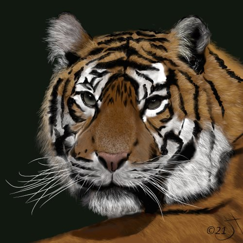 Name:  Tiger, tigerAR.jpg Views: 67 Size:  59.1 KB