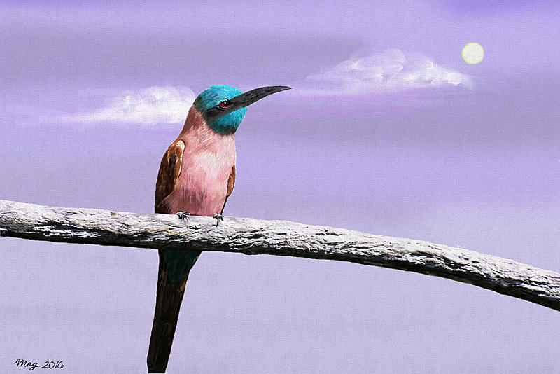 Click image for larger version.  Name:bee_eater_small.jpg Views:34 Size:119.5 KB ID:90918