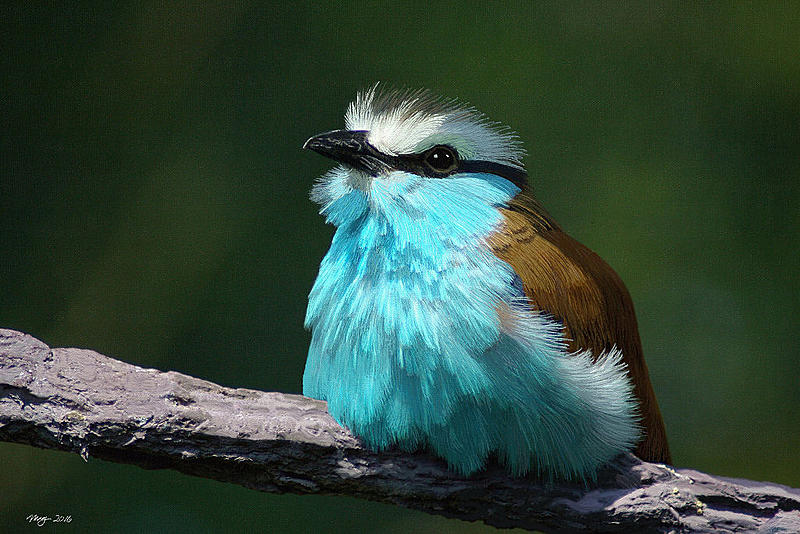 Click image for larger version.  Name:bluebird_small.jpg Views:32 Size:144.0 KB ID:90919
