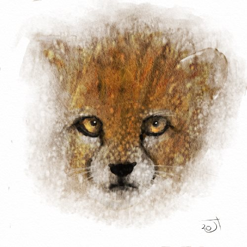 Name:  Baby CheetahAR.jpg Views: 33 Size:  45.7 KB