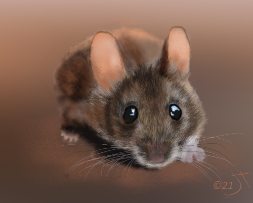 Name:  House MouseAR.jpg