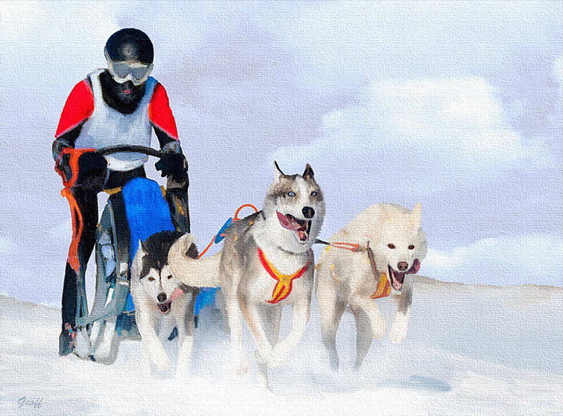 Name:  dogsled1.jpg