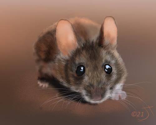 Name:  House MouseAR.jpg Views: 77 Size:  95.4 KB