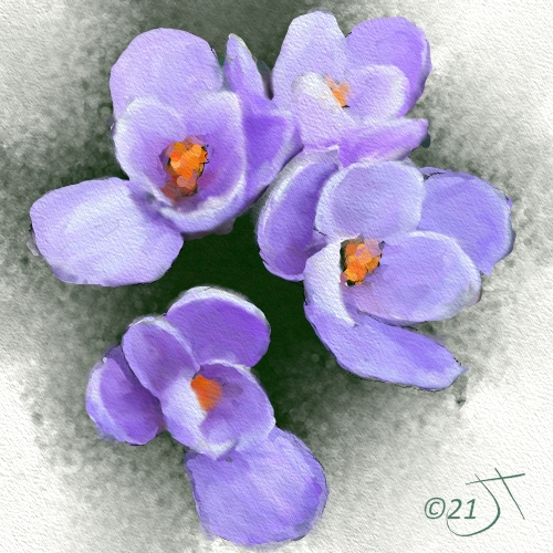 Name:  CrocusAR.jpg