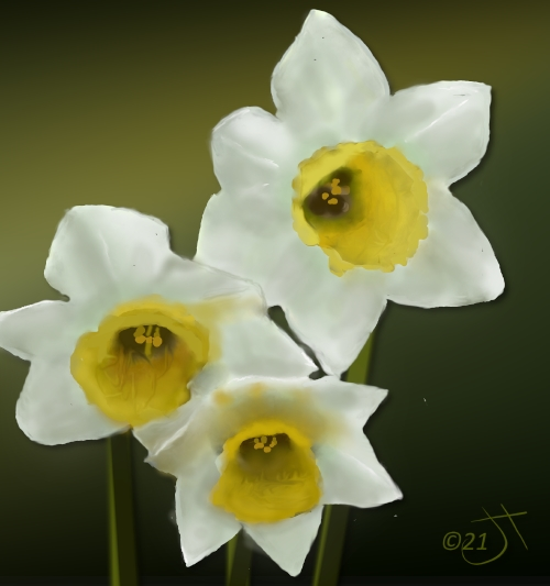 Name:  daffodilsAR.jpg