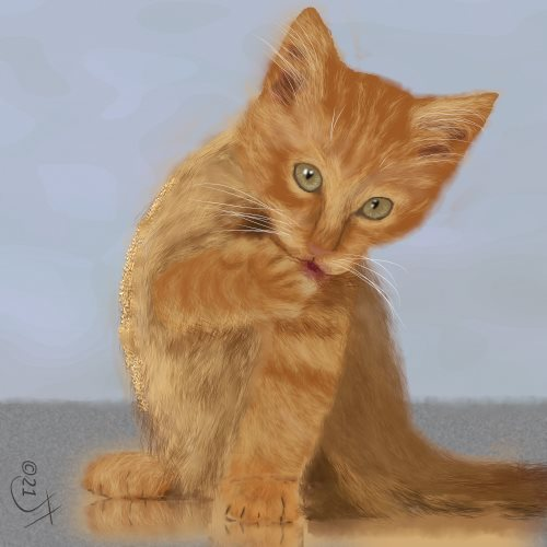 Name:  Ginger kitAR.jpg Views: 53 Size:  31.9 KB
