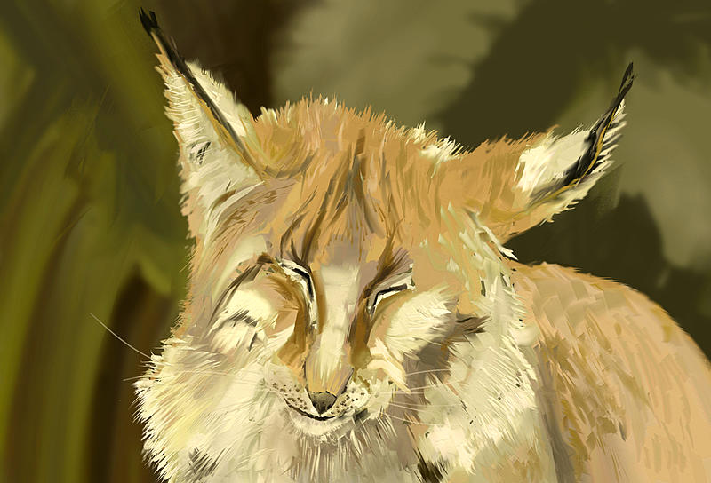 Click image for larger version.  Name:lynx-1-2-1536.jpg Views:8 Size:162.2 KB ID:101812