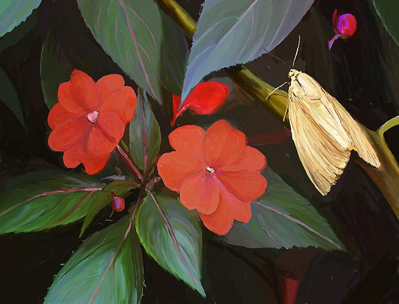 Click image for larger version.  Name:Red Flowers, Golden Moth.jpg Views:152 Size:239.6 KB ID:90814
