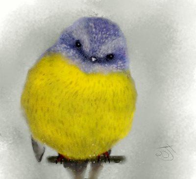 Name:  western yellow robinAR.jpg Views: 86 Size:  20.1 KB