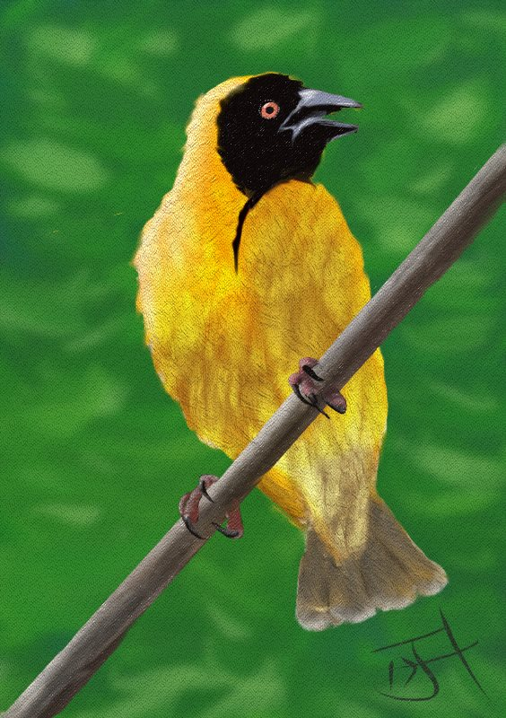 Name:  Yellow Bird.jpg