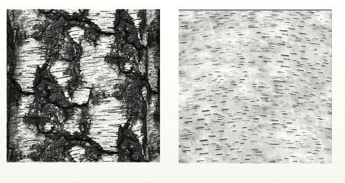 Name:  Tree Bark.png Views: 131 Size:  181.7 KB