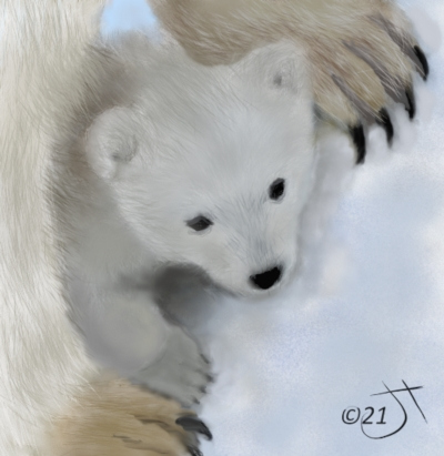 Name:  Polar bear cubAR.jpg