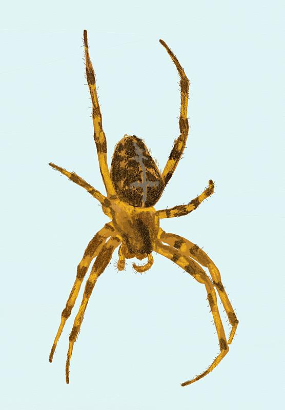 Click image for larger version.  Name:Spider.jpg Views:12 Size:203.6 KB ID:98307