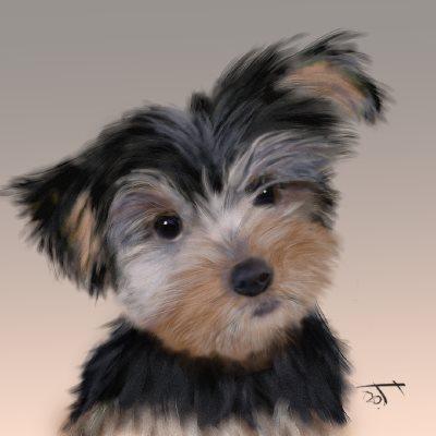 Name:  Yorkshire puppyAR.jpg Views: 20 Size:  21.1 KB