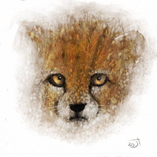 Name:  Baby CheetahAR.jpg Views: 41 Size:  45.7 KB