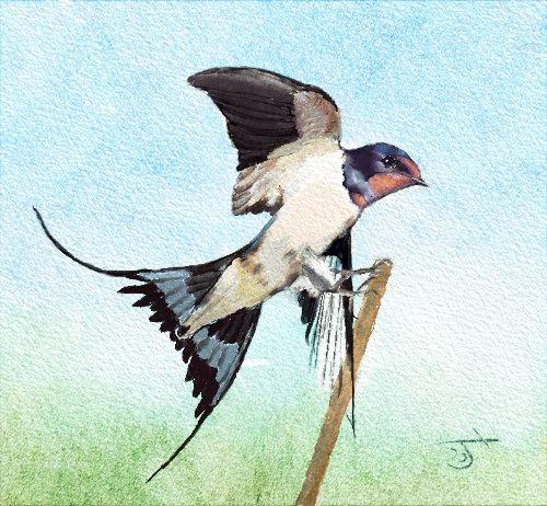 Name:  Bird.jpg Views: 93 Size:  71.8 KB