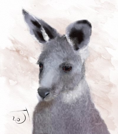 Name:  KangarooAR.jpg Views: 66 Size:  26.3 KB