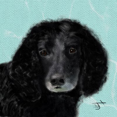 Name:  Black SpanielAR.jpg