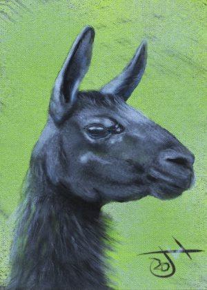 Name:  Alpaca.th.jpg Views: 112 Size:  29.1 KB