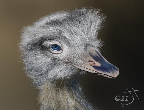 Name:  OstrichAR.jpg Views: 61 Size:  113.7 KB