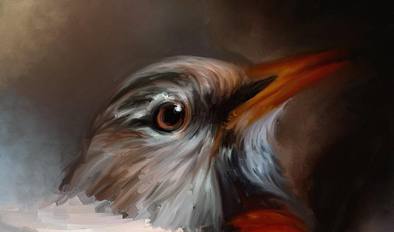 Click image for larger version.  Name:Spring Robin_AR_Dale Jackson_WIP_1.jpg Views:89 Size:209.5 KB ID:99020