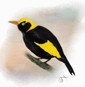 Name:  Regent Bower BirdAR.jpg Views: 79 Size:  13.4 KB