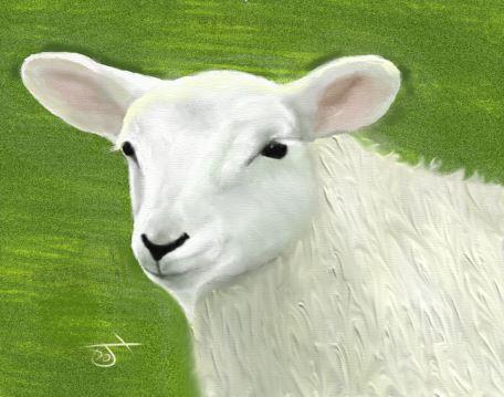 Name:  sheepsnip2.JPG Views: 52 Size:  35.4 KB