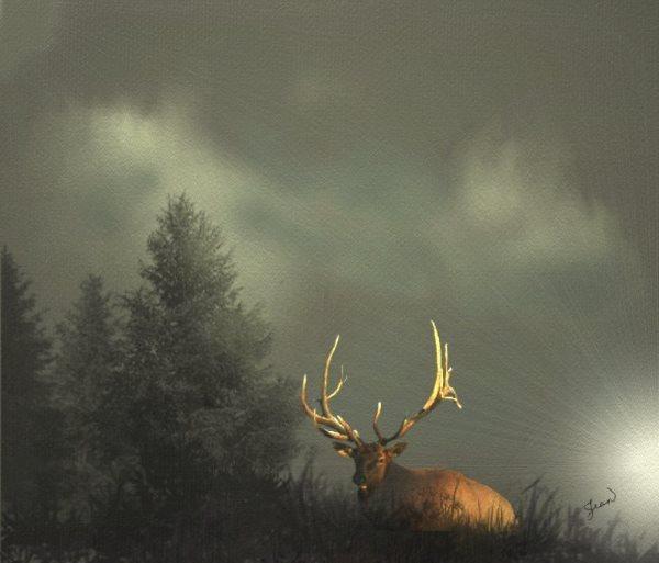 Name:  elk and trees ..jpg Views: 148 Size:  40.2 KB