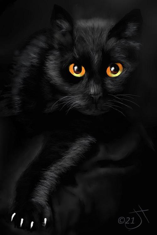 Name:  Black Cat #1AR.jpg Views: 78 Size:  34.7 KB
