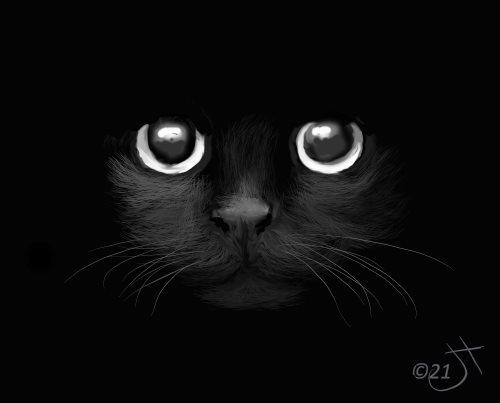 Name:  Black cat #2AR.jpg Views: 31 Size:  15.1 KB