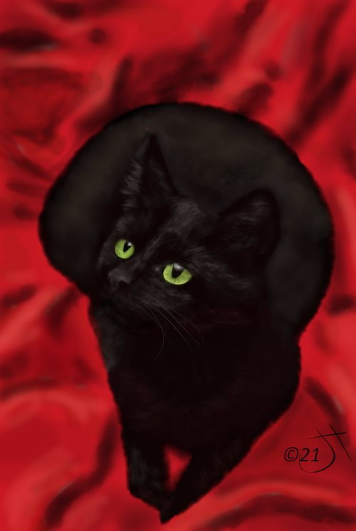 Name:  Black Cat #3AR.jpg Views: 26 Size:  28.9 KB