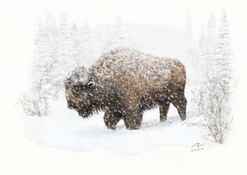 Click image for larger version.  Name:Bison.jpg Views:68 Size:107.6 KB ID:100490