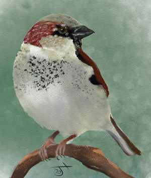 Name:  SparrowAR.jpg Views: 52 Size:  59.4 KB