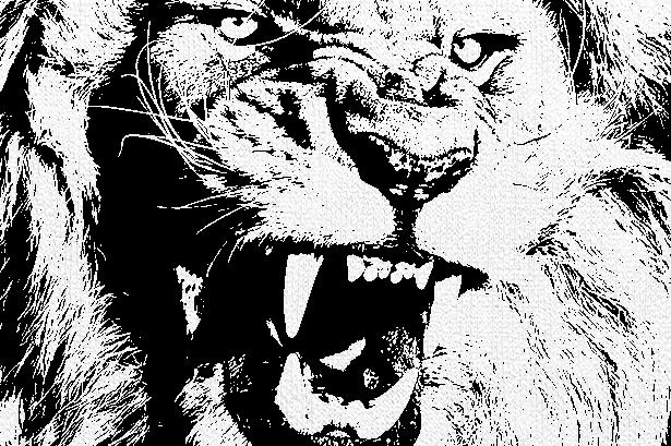 Name:  lion bw.jpg Views: 912 Size:  297.3 KB