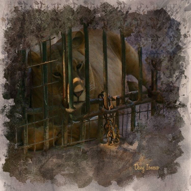 Name:  Le Lion musicien_D.Ionesco.jpg Views: 70 Size:  465.2 KB