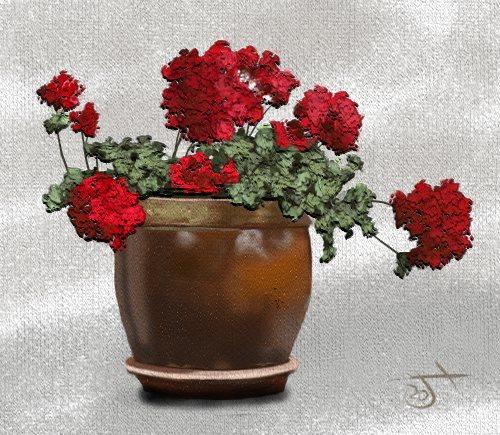 Name:  Geraniums in pot.jpg Views: 56 Size:  76.3 KB