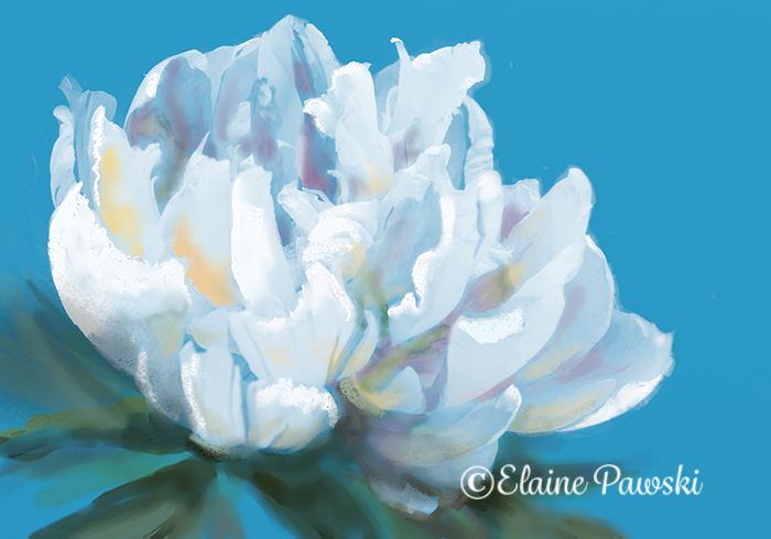 Name:  Peonie from stencil.jpeg