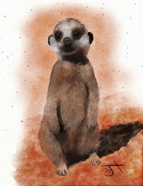 Name:  Meerkat.jpg Views: 45 Size:  65.7 KB