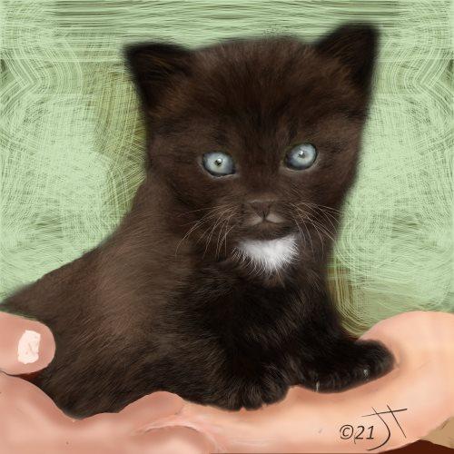Name:  A cute handfulAR.jpg Views: 87 Size:  48.8 KB