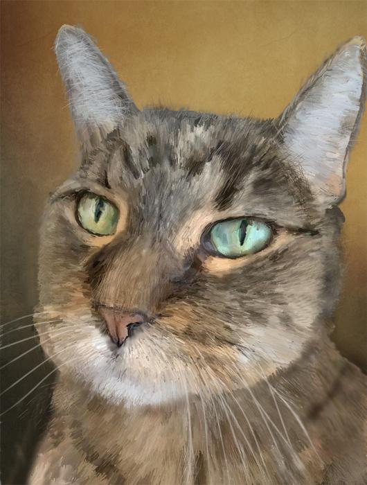 Name:  cat4.jpg Views: 64 Size:  323.0 KB
