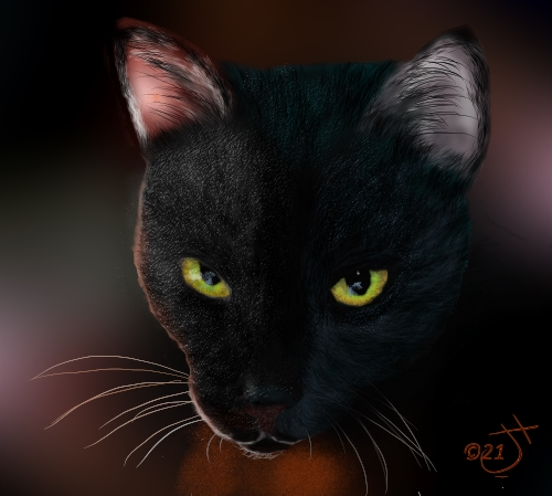 Name:  Another Black CatAR.jpg Views: 57 Size:  118.8 KB