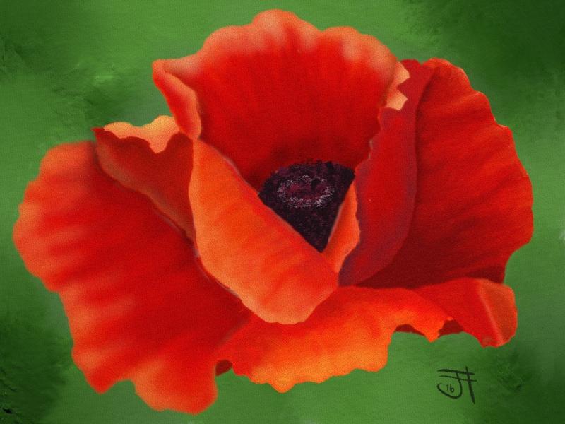 Name:  Poppy.jpg Views: 80 Size:  396.9 KB