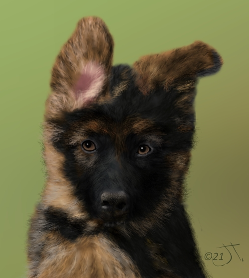 Name:  German Shepherd PupAR (1).jpg