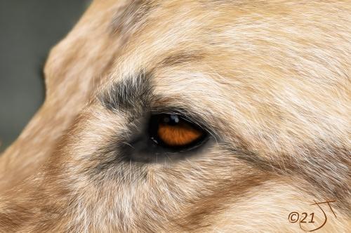 Name:  DogFaceAR.jpg Views: 69 Size:  162.2 KB