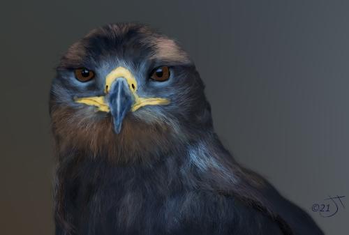 Name:  Eagle eyedAR.jpg Views: 51 Size:  70.5 KB