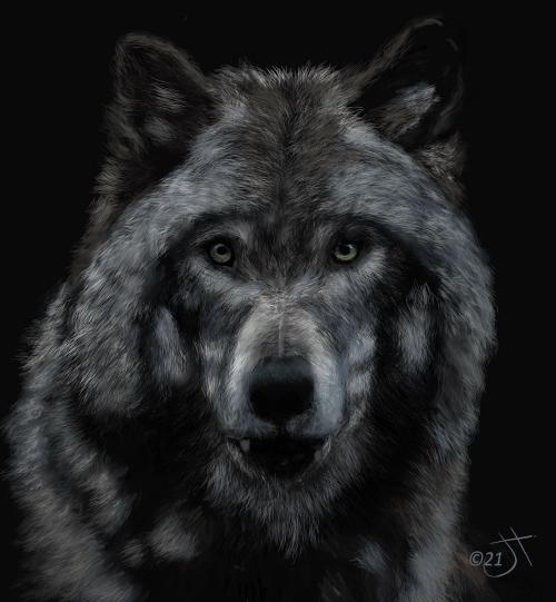 Name:  WolfAR.jpg Views: 106 Size:  158.7 KB