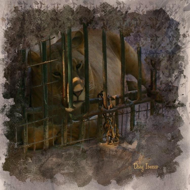 Name:  Le Lion musicien_D.Ionesco.jpg Views: 60 Size:  465.2 KB