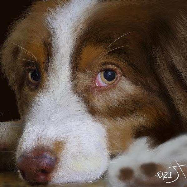 Name:  Bown n white dogAR.jpg Views: 106 Size:  282.0 KB