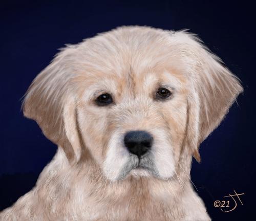 Name:  Golden Retriever PupAR.jpg Views: 63 Size:  129.3 KB