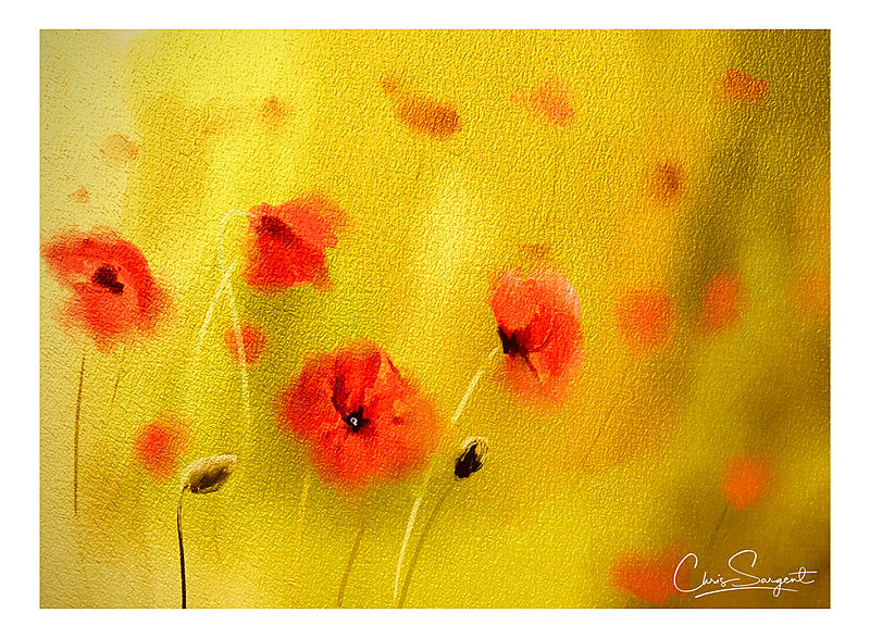 Click image for larger version.  Name:poppies_3.jpg Views:40 Size:466.1 KB ID:98919